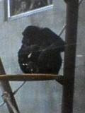 旭山動物園です